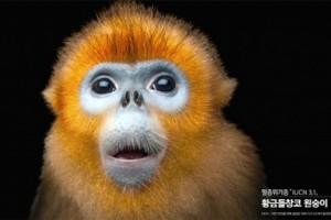 '멸종동물 공원' 뉴욕 페스티벌 파이널리스트 수상 영예